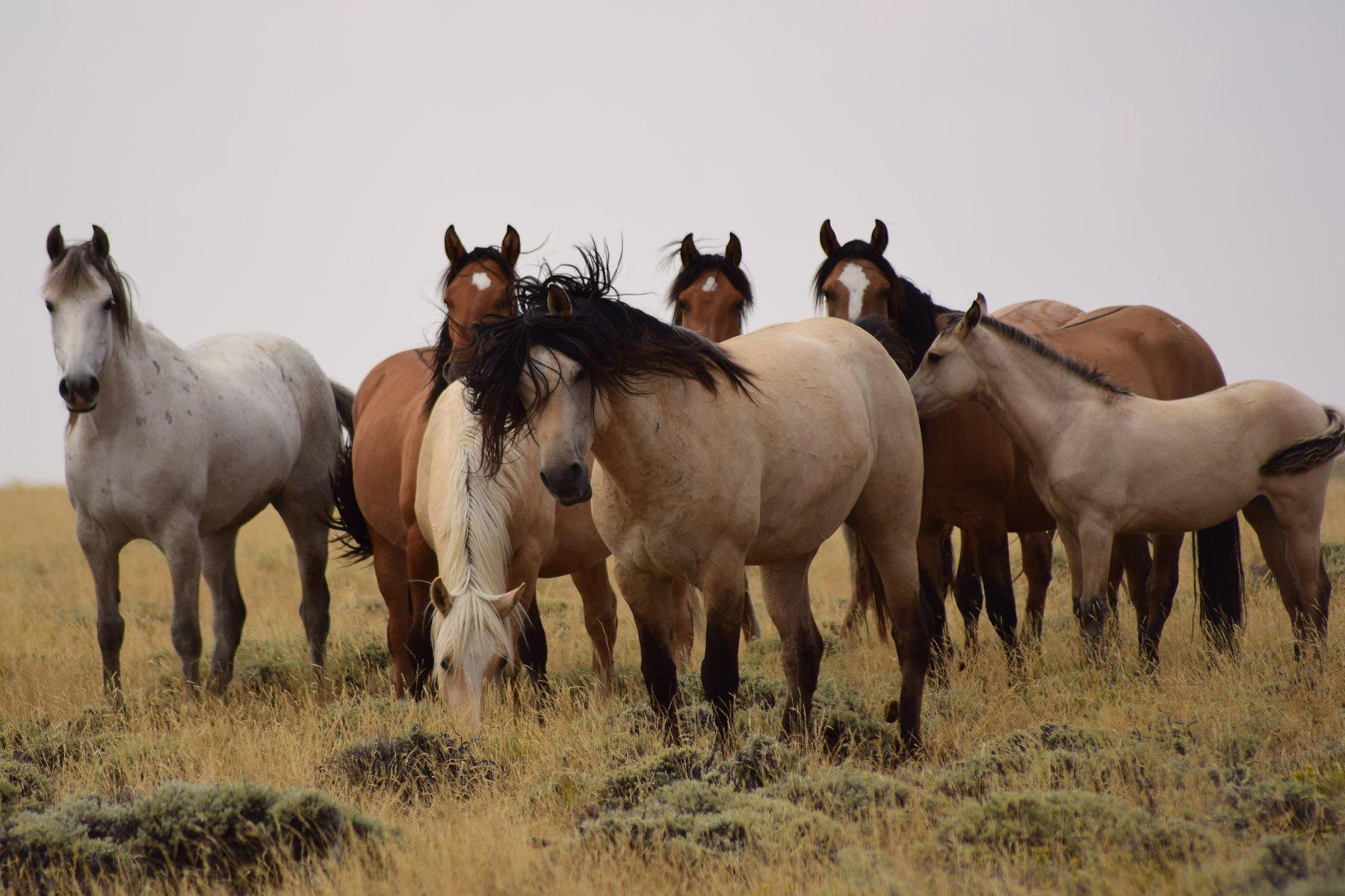 Reward Offered for Info on Wild Horses Killed in the Red Desert