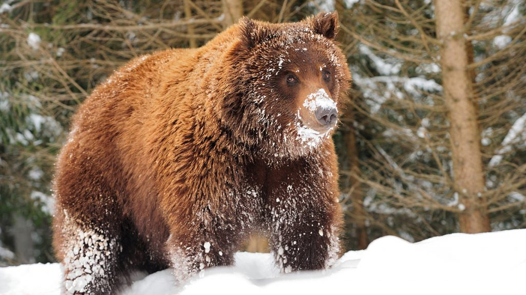 Conservative Hunting Regulations Approved for Grizzly Bears