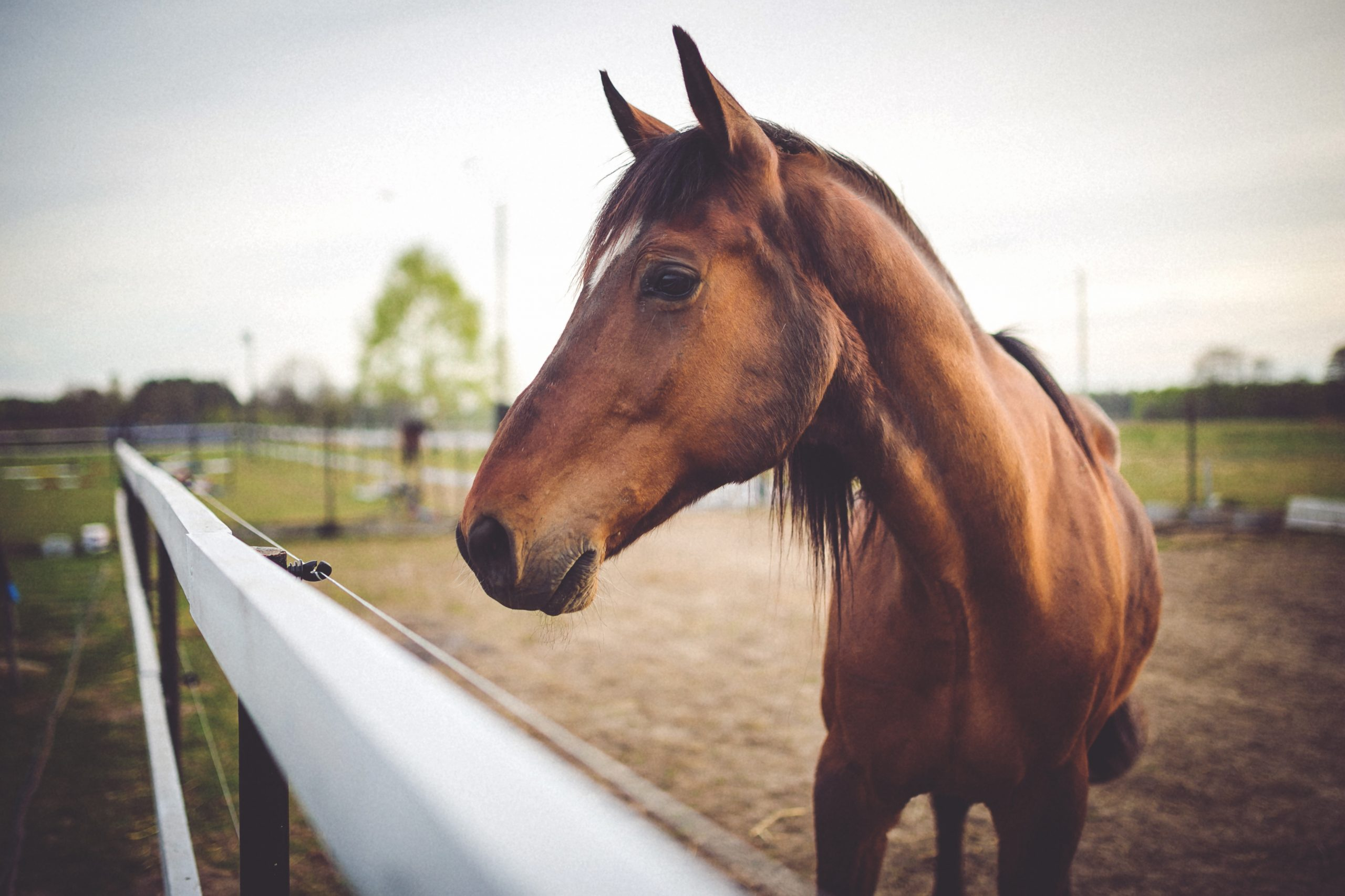Rock Springs Makes Changes to Horse Ordinance