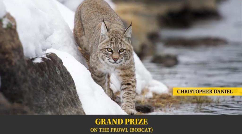 Stunning Photos Featured in Wyoming Wildlife Slideshow [VIDEO]