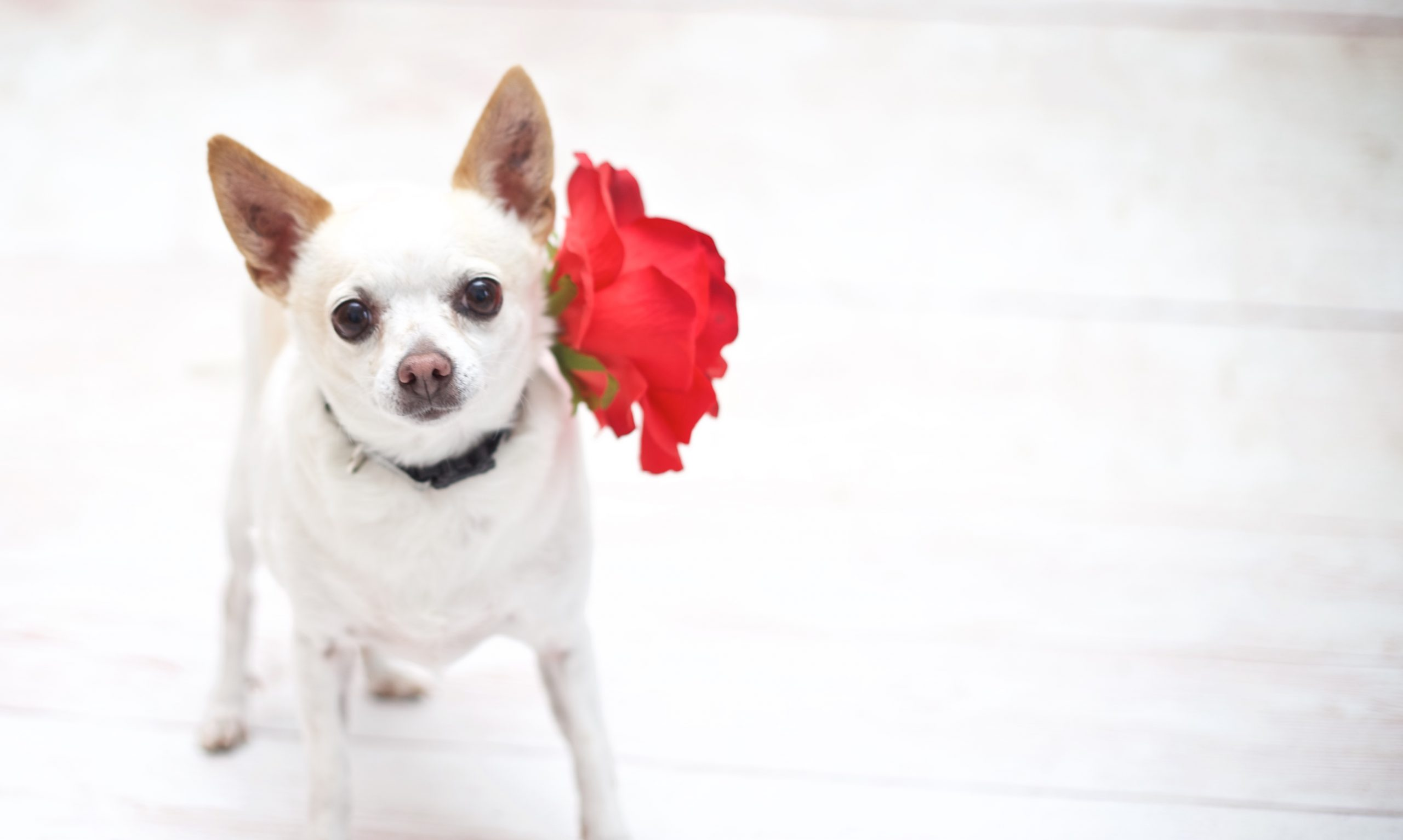 Adorable & Adoptable: Pets of the Week