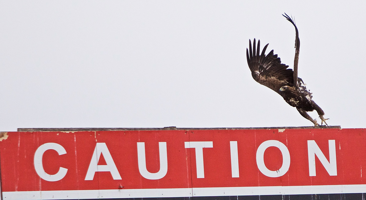 Join BLM Rawlins for a Raptor Identification Class and Migratory Bird Walk