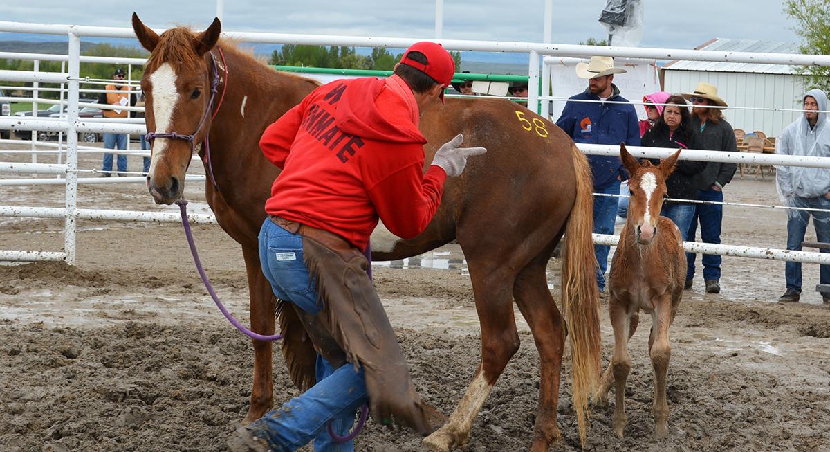 72 Wild Horses & Burros Placed at BLM Honor Farm 30-Year Anniversary Adoption