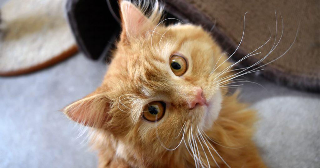Adorable Adoptables: Shasta, Merlin & Stewart The Minion