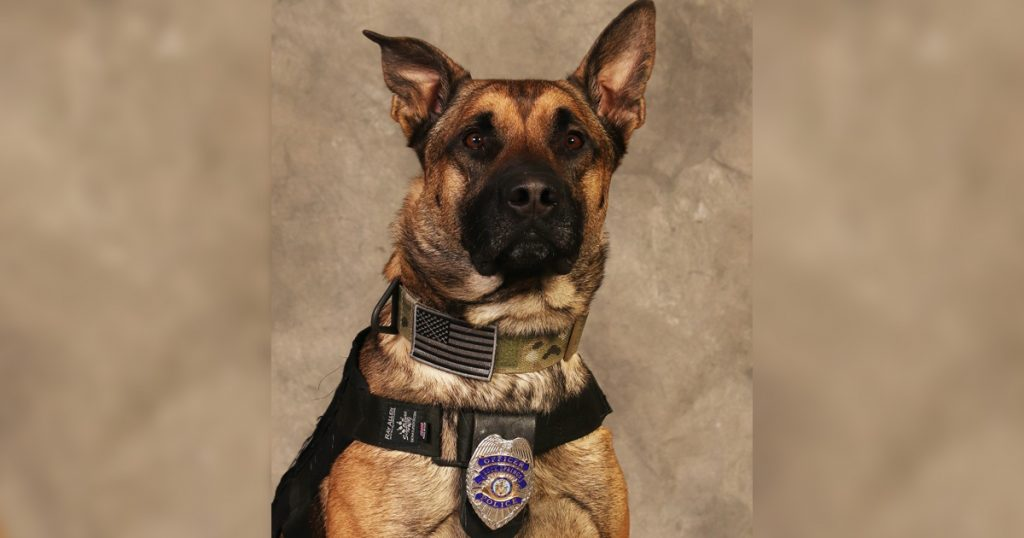 RSPD's K9 Max to Receive Donation of Body Armor