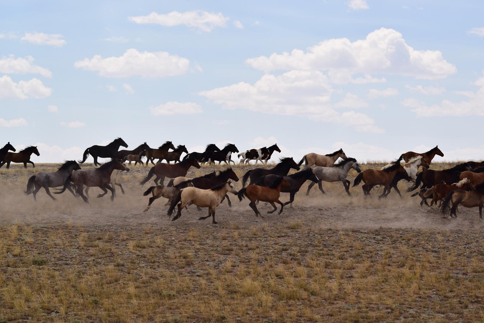 BLM to Begin Red Desert Wild Horse Gather