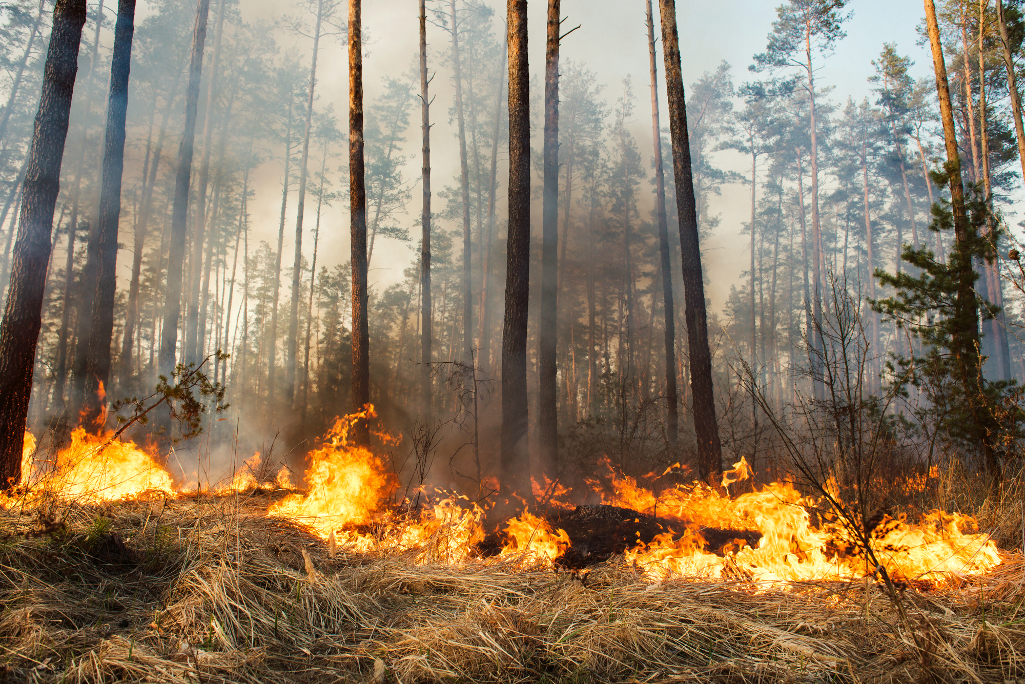 Wildfire Ignites Outside Yellowstone, Fire Danger High
