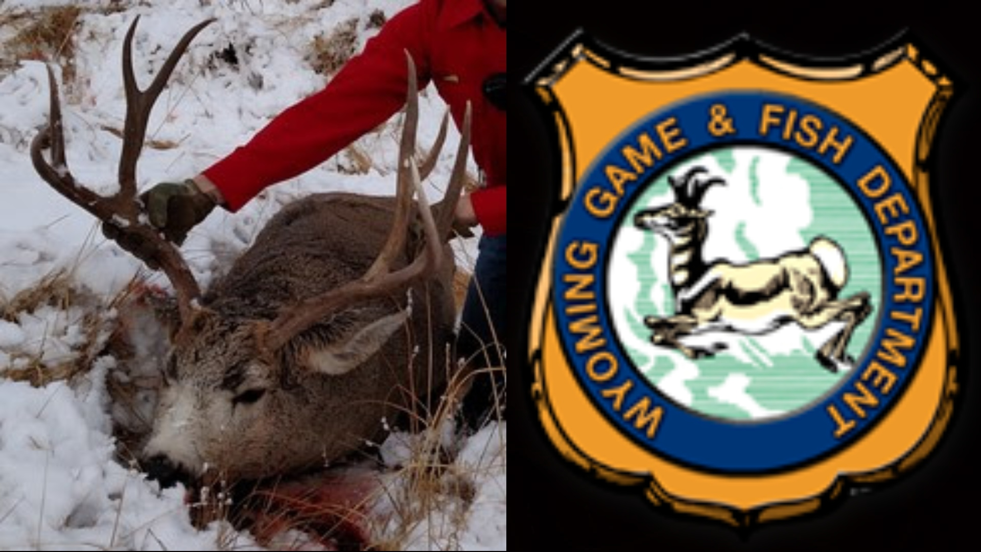 South Dakota residents plead guilty in 2017 Wyoming poaching case