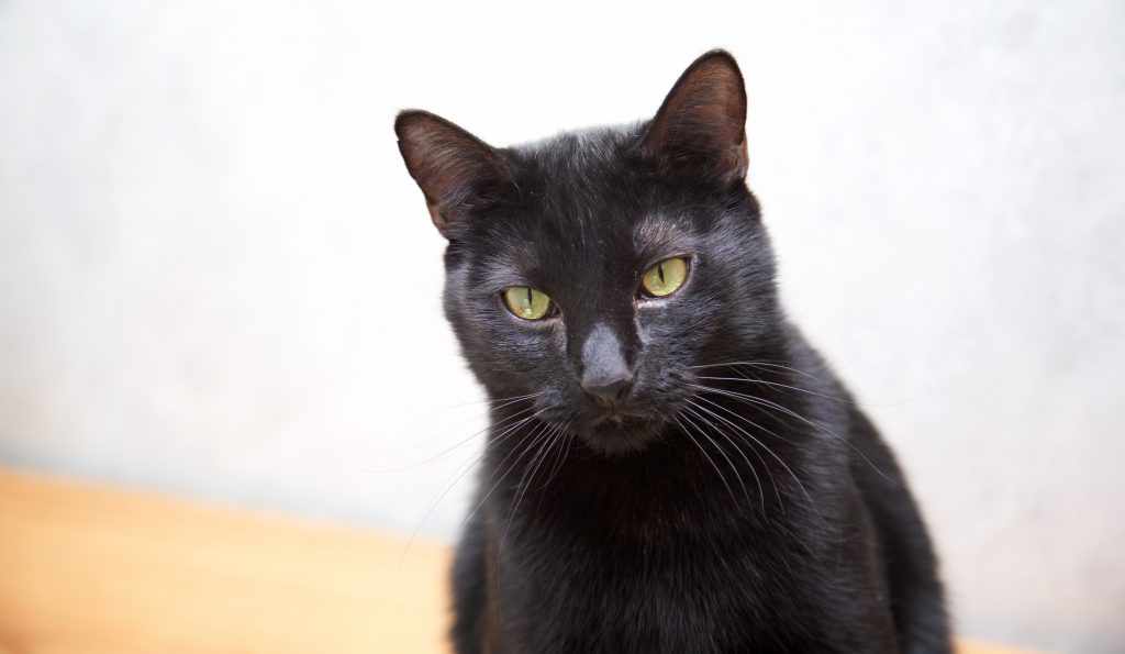 Adorable Adoptables: Poncho, Annie, & Midnight