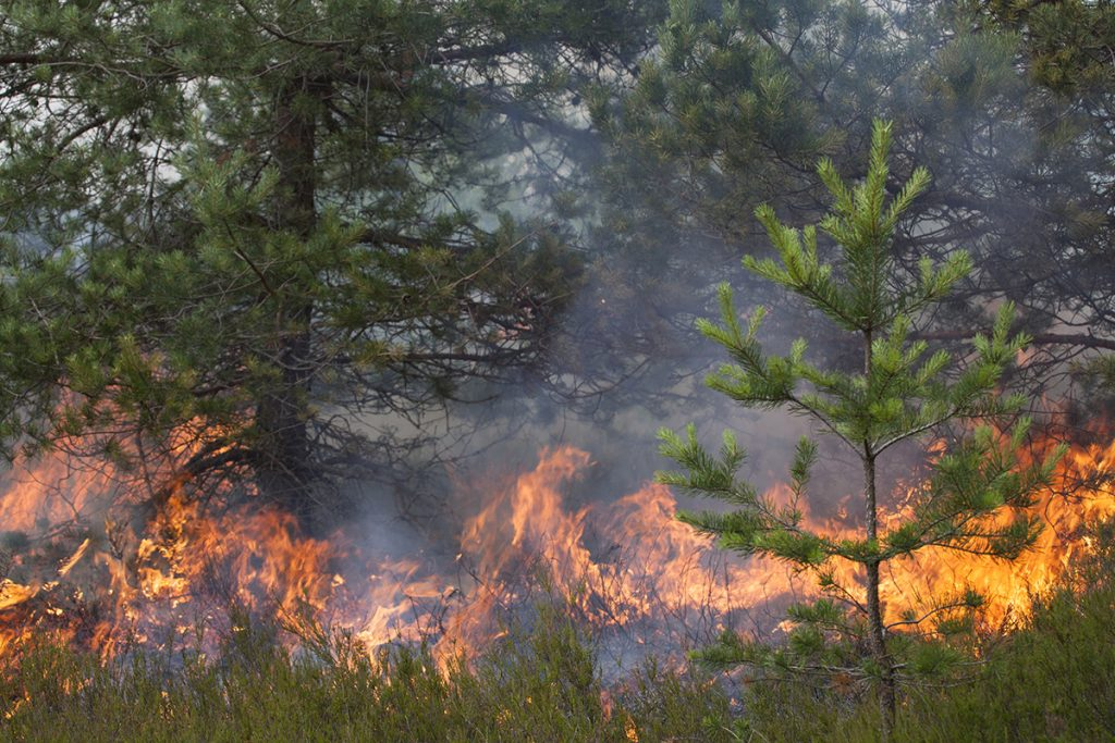 Decreasing Number of Rainy Days Increases Western Wildfires