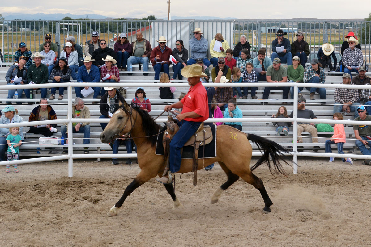 Thirty-Year Partnership Sees Another Successful Wild Horse and Burro Adoption
