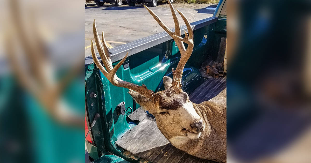 Game & Fish Looking for Information on Deer Poached in Rock Springs