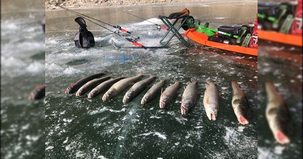 Warm Up Your Smoker for Abundant Flaming Gorge Lake Trout