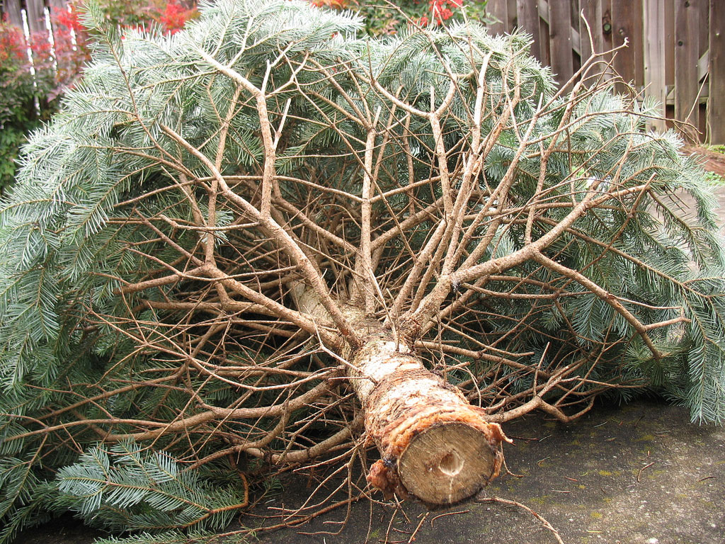 Green River Resident Brings Forth Christmas Tree and Tire Disposal Concerns