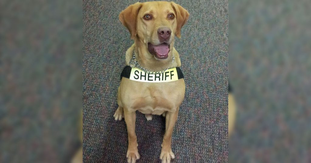 Sublette County Sheriff's Office Regrets to Announce the Passing of Retired K9 Max