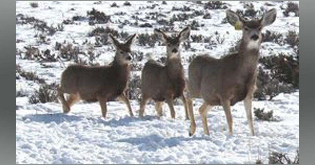 Public Invited to Discuss Wyoming Range Mule Deer Herd, Big Game Migration Corridors
