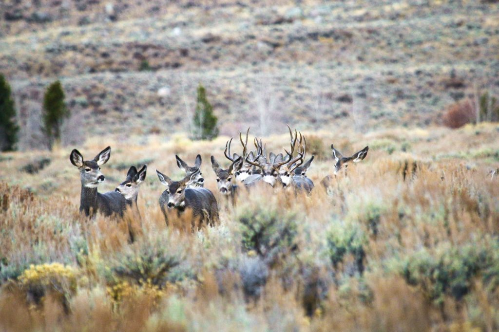 Governor Launches Big Game Migration Corridor Advisory Group