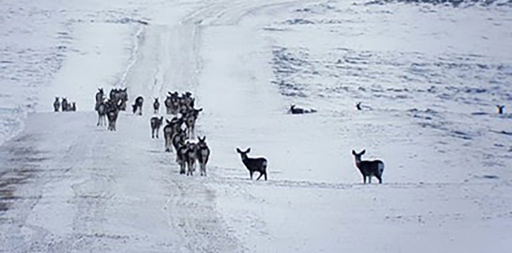 Potential Hard Winter for Some Big Game Populations in the Pinedale Area
