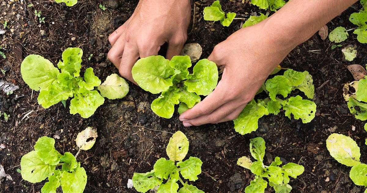 #GetGrowing: Wyoming Gardening Hacks