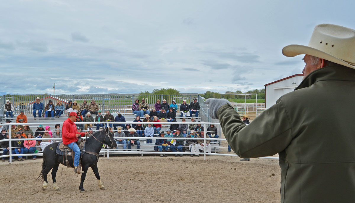 Record High Bid at Honor Farm Wild Horse and Burro Adoption