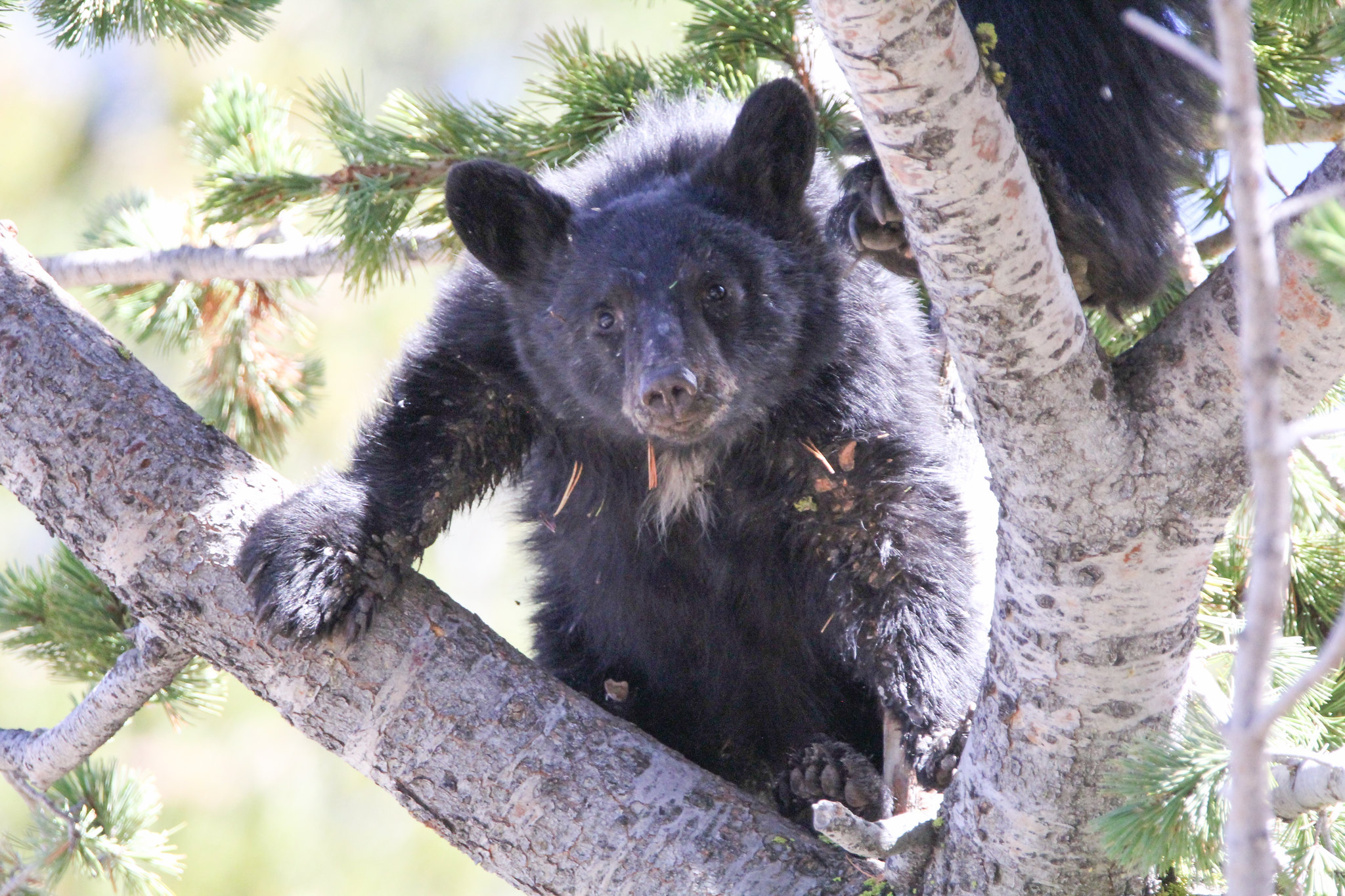Three Bear Incidents Serve as Reminder to Demonstrate Proper Food Storage