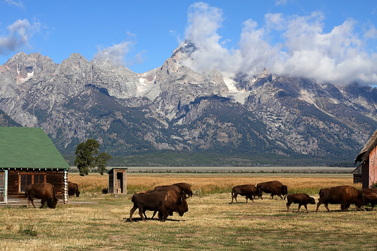 OPINION: Tourism Can Be a Driving Force in Diversifying Wyoming's Economy