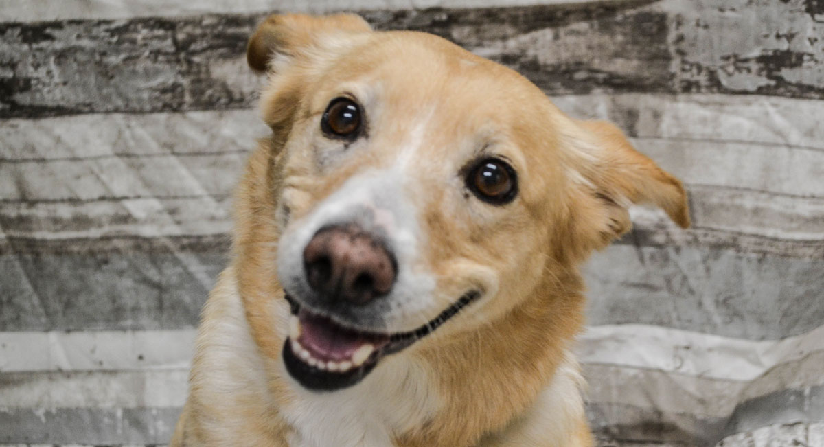Adorable & Adoptable–Pets of the Week: Shadow, Rusty, & Cinnamon