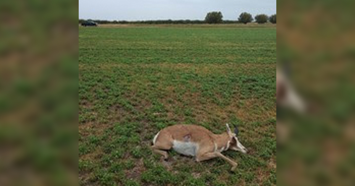 Game and Fish Department Seeks Information on Poached Antelope