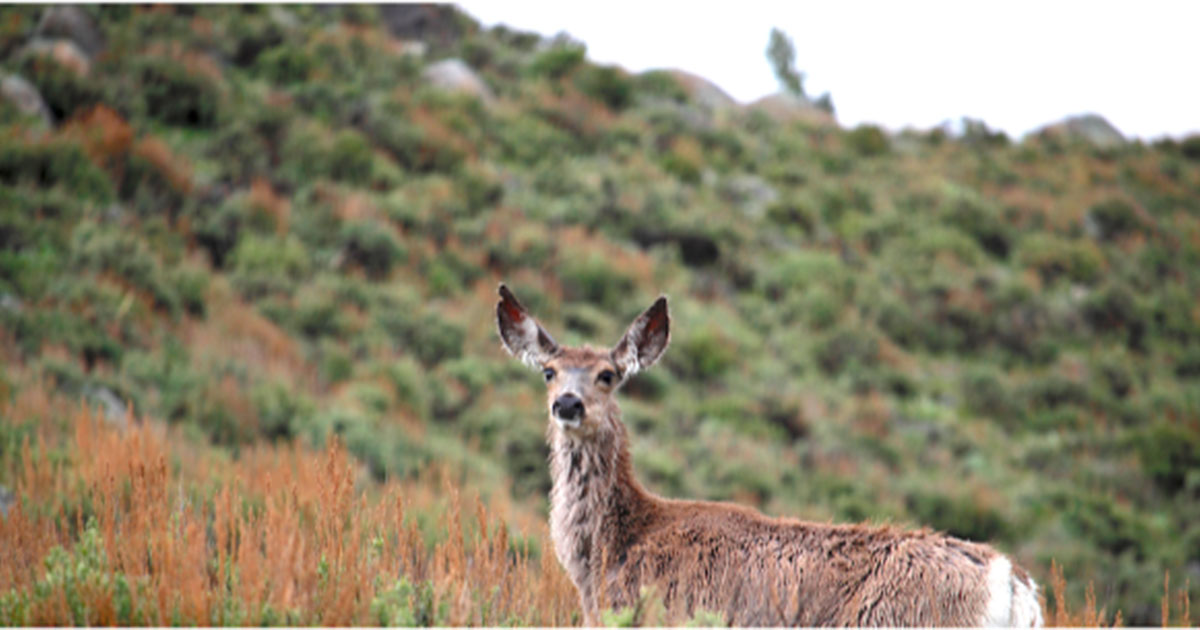Dominion Energy Foundation Funds Work on Mule Deer Migrations in Southwest Wyoming