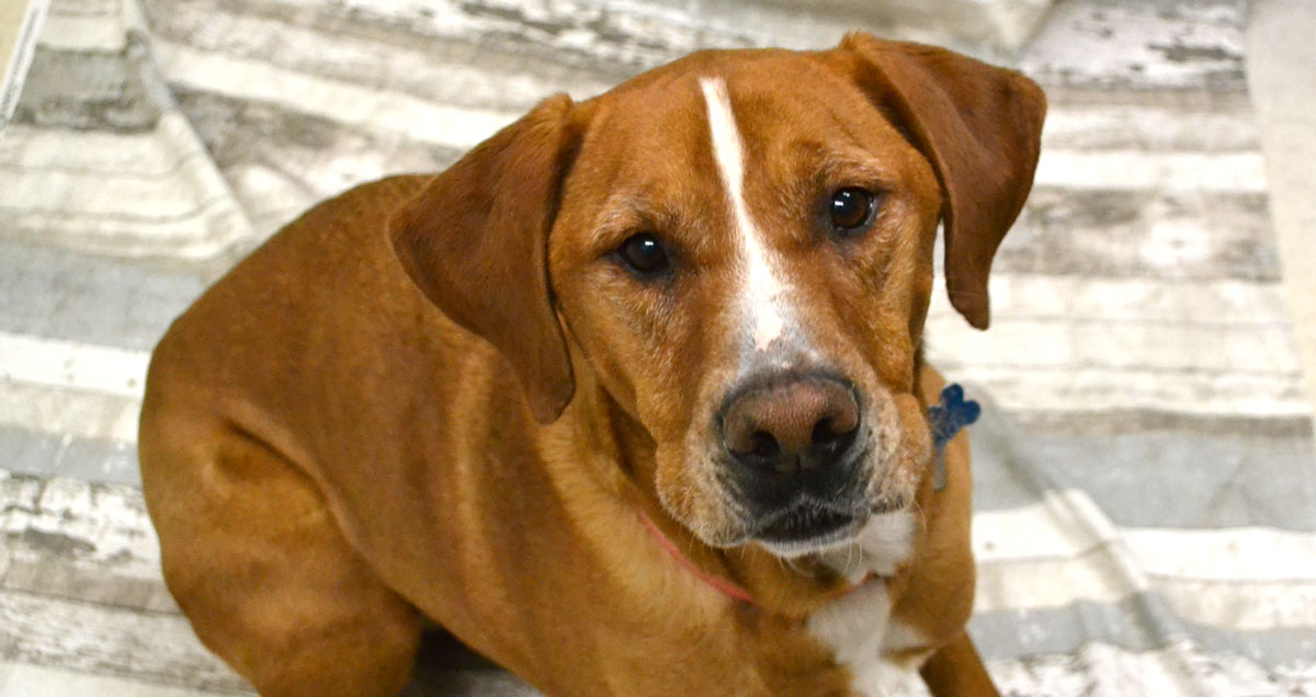 Adorable & Adoptable–Pets of the Week: Carol, Ruger, & Kida