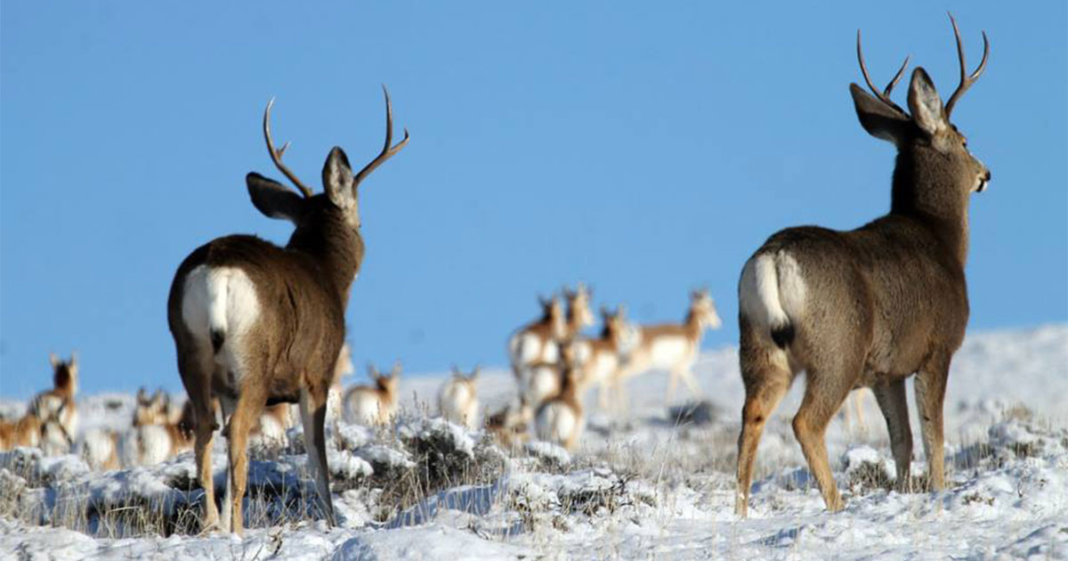 BLM Pinedale Begins Road Closure to Motorized Vehicles on Big Game Winter Ranges