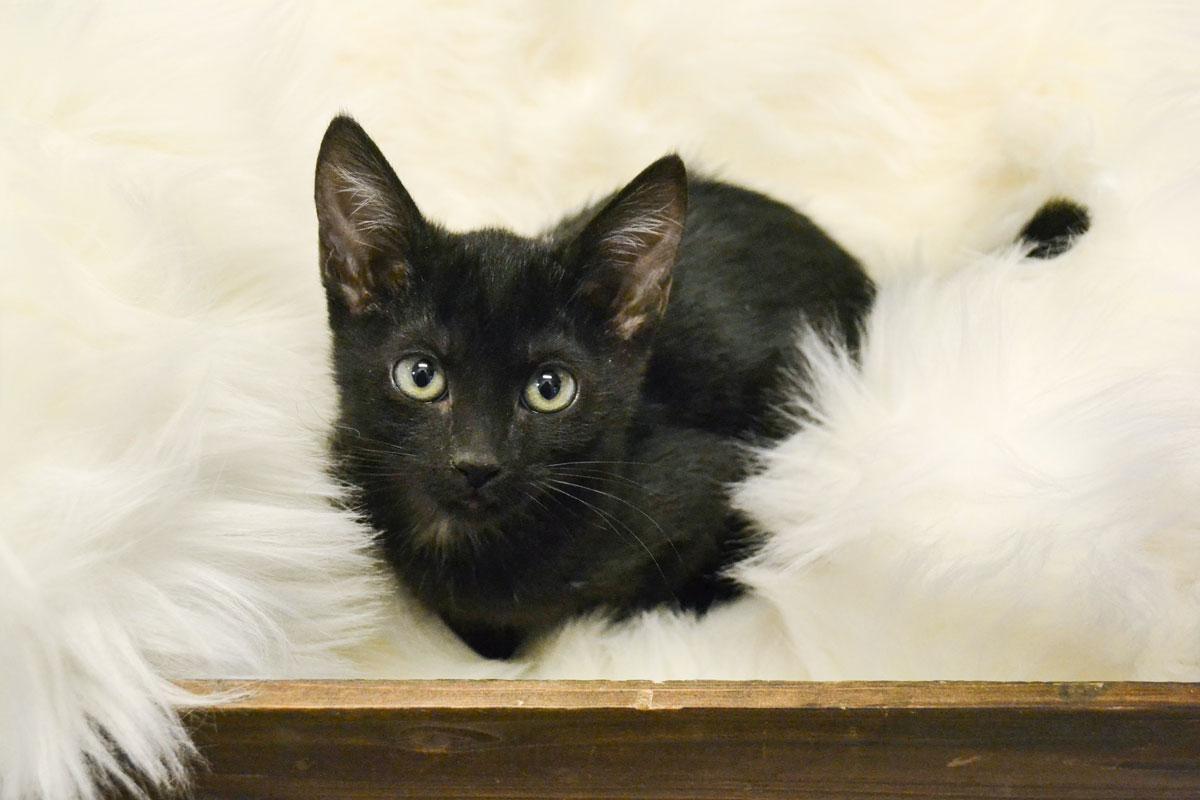 Adorable & Adoptable–Pets of the Week: Zip, Maiz, & Nala