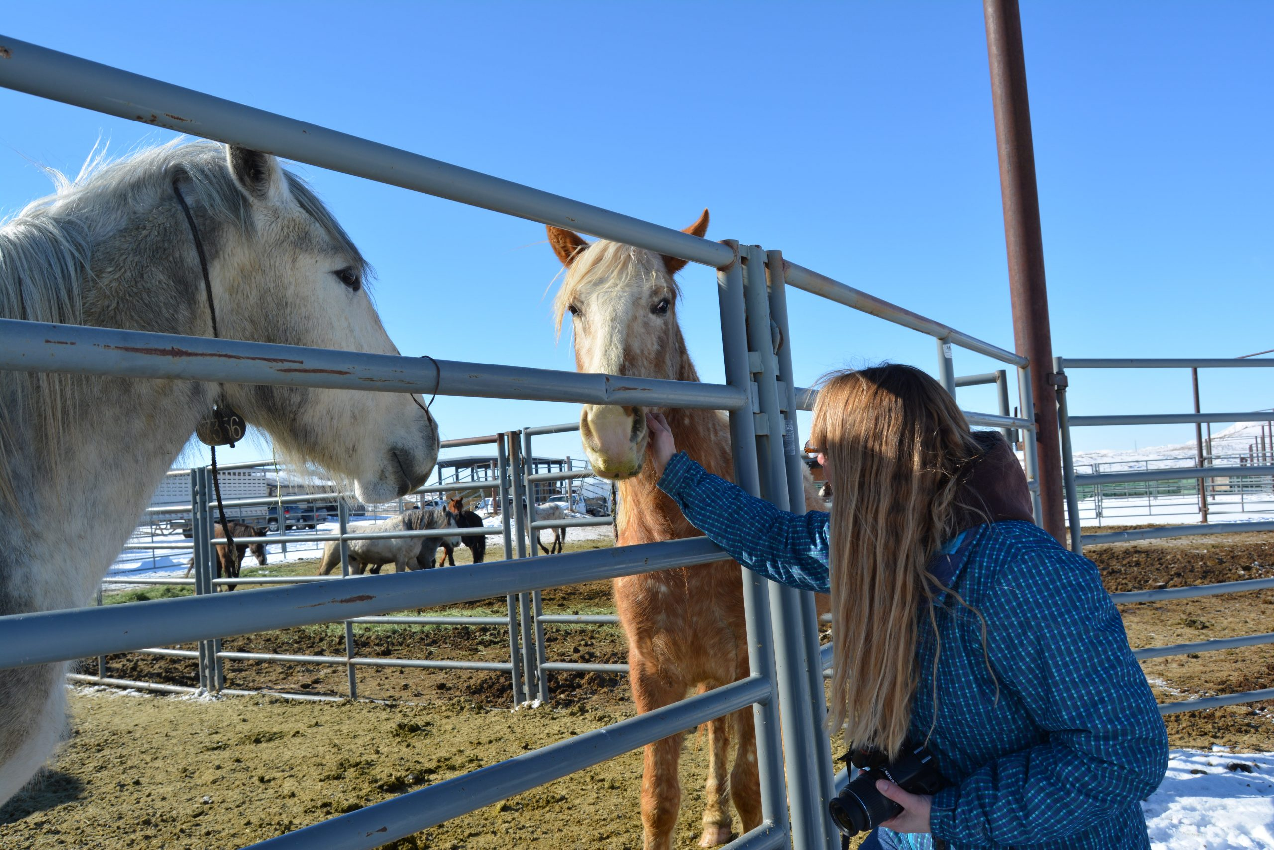 BLM Sets Wild Horse Adoption Events for 2020