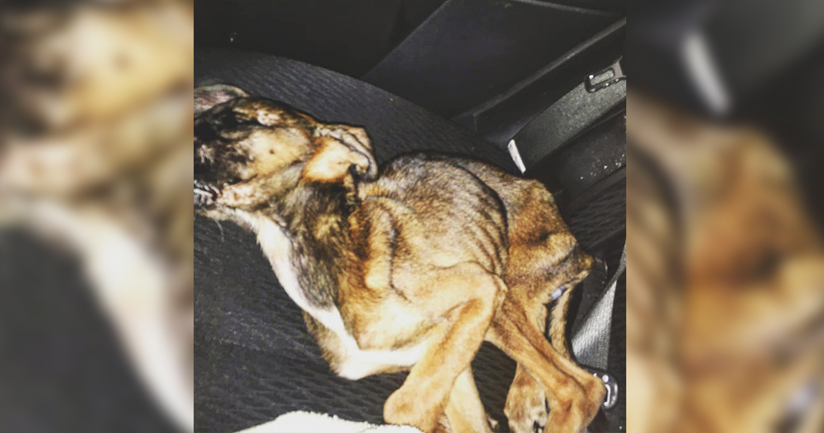 Dog Dies: RS Woman Charged With Animal Cruelty