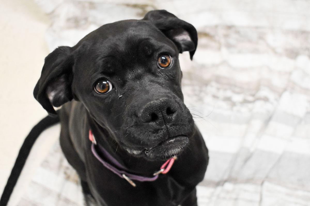 Adorable & Adoptable–Pets of the Week: Jigs, Aspen, & Clover