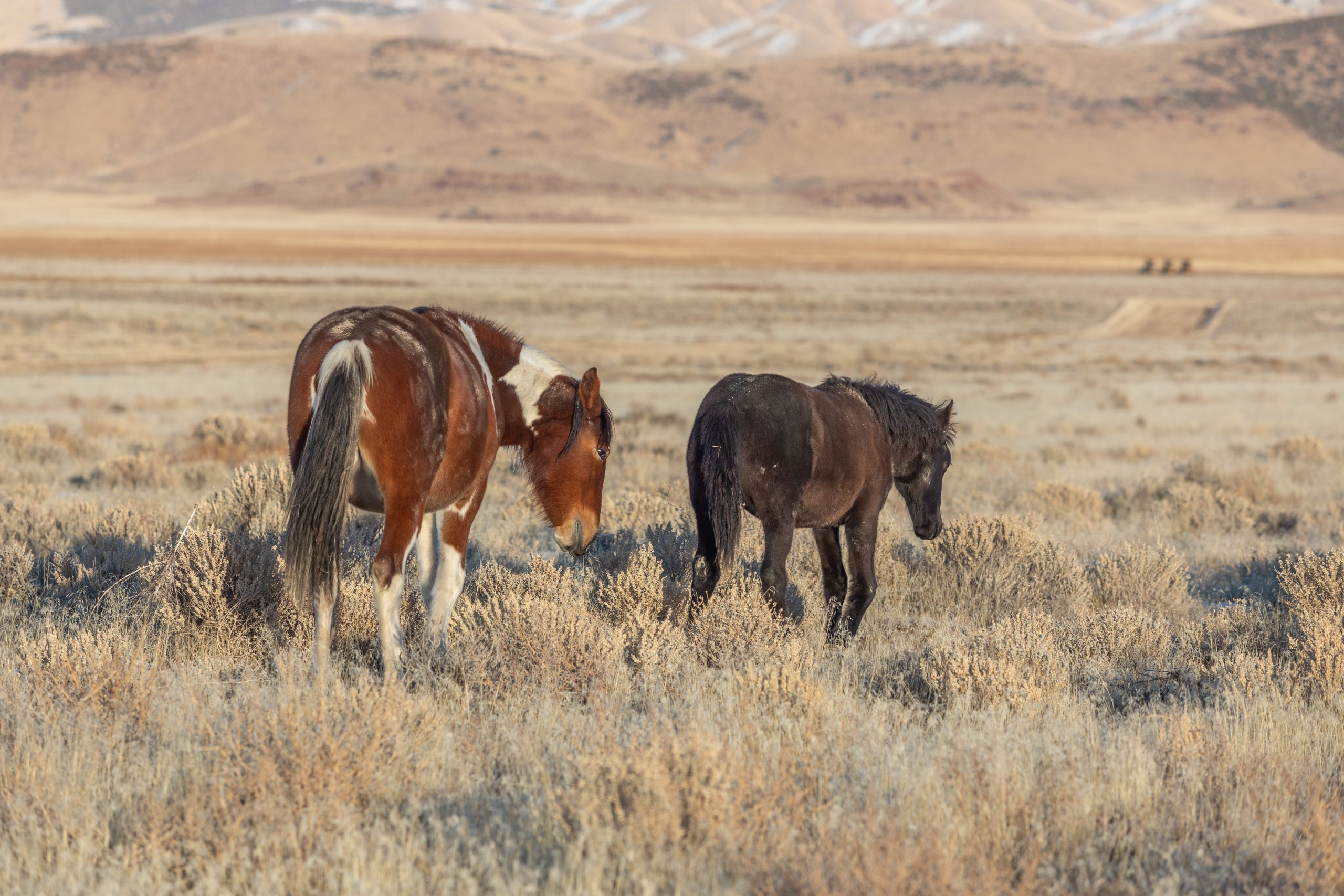 BLM Meeting For Wild Horse Management Set For Today