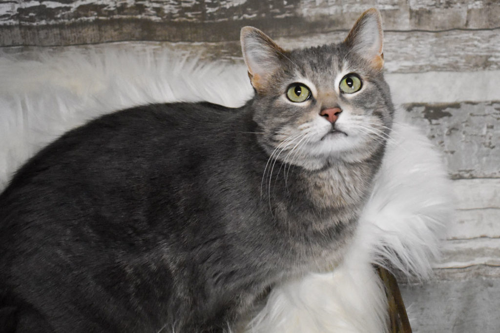 Adorable & Adoptable–Pets of the Week: Leah, Molly, & Kittles