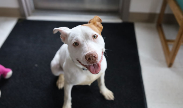 Adorable & Adoptable–Pets of the Week: Chuck, Luna, & Freedom