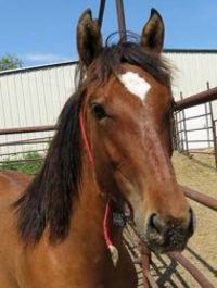 Wild Horses and Burros Available for Adoption at Cheyenne Frontier Days