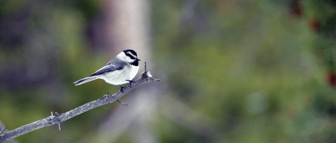 Celebrate Migratory Bird Day in Yellowstone