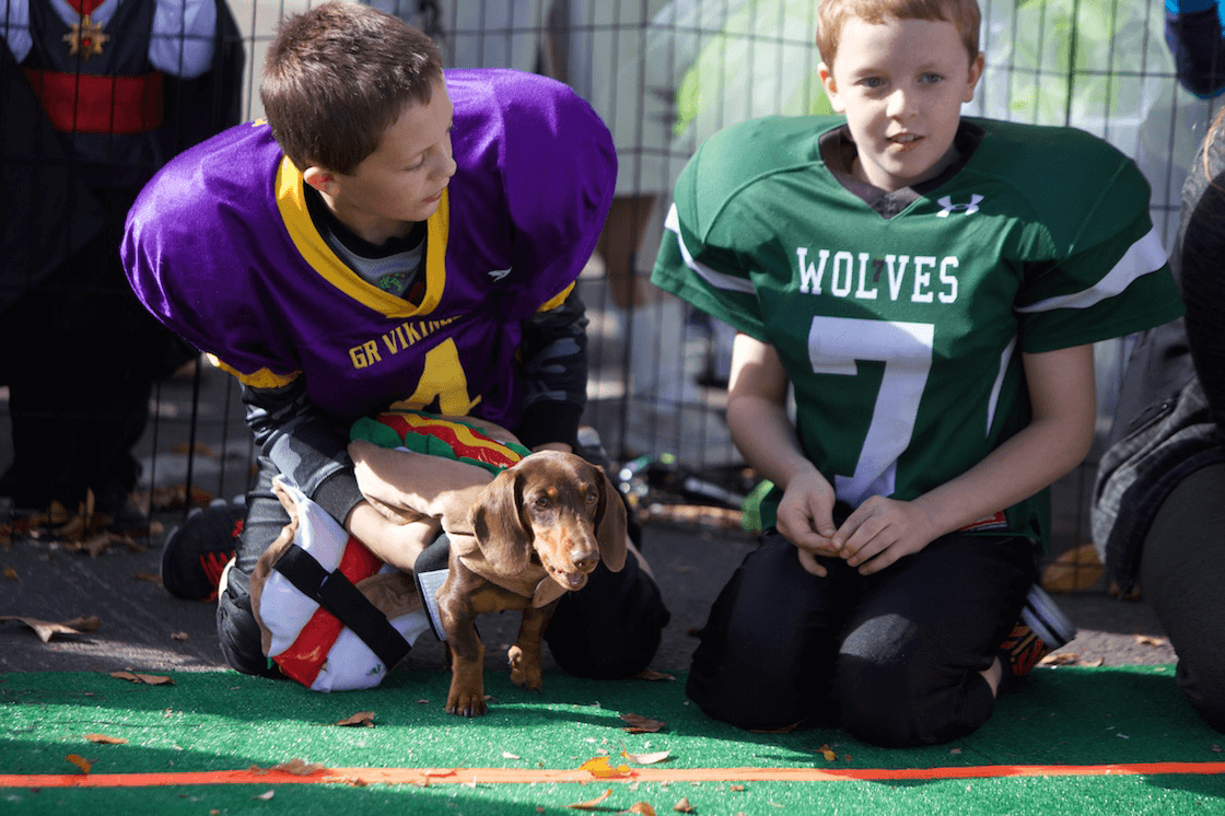 Wiener Dogs Go to the Races at Annual Long Dog Derby