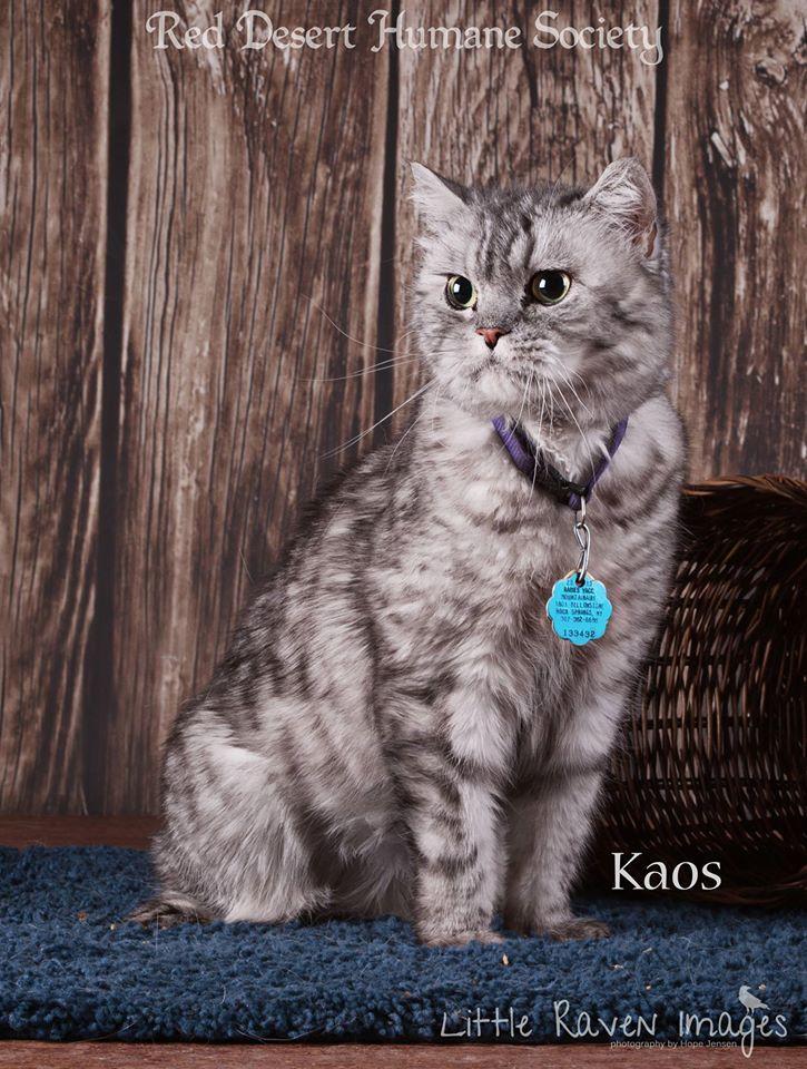 Kaos and Cinnamon Available at RDHS