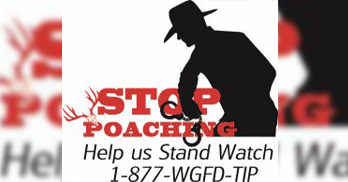 Information Sought on Pronghorn Poached Near Shoshoni, Wyoming