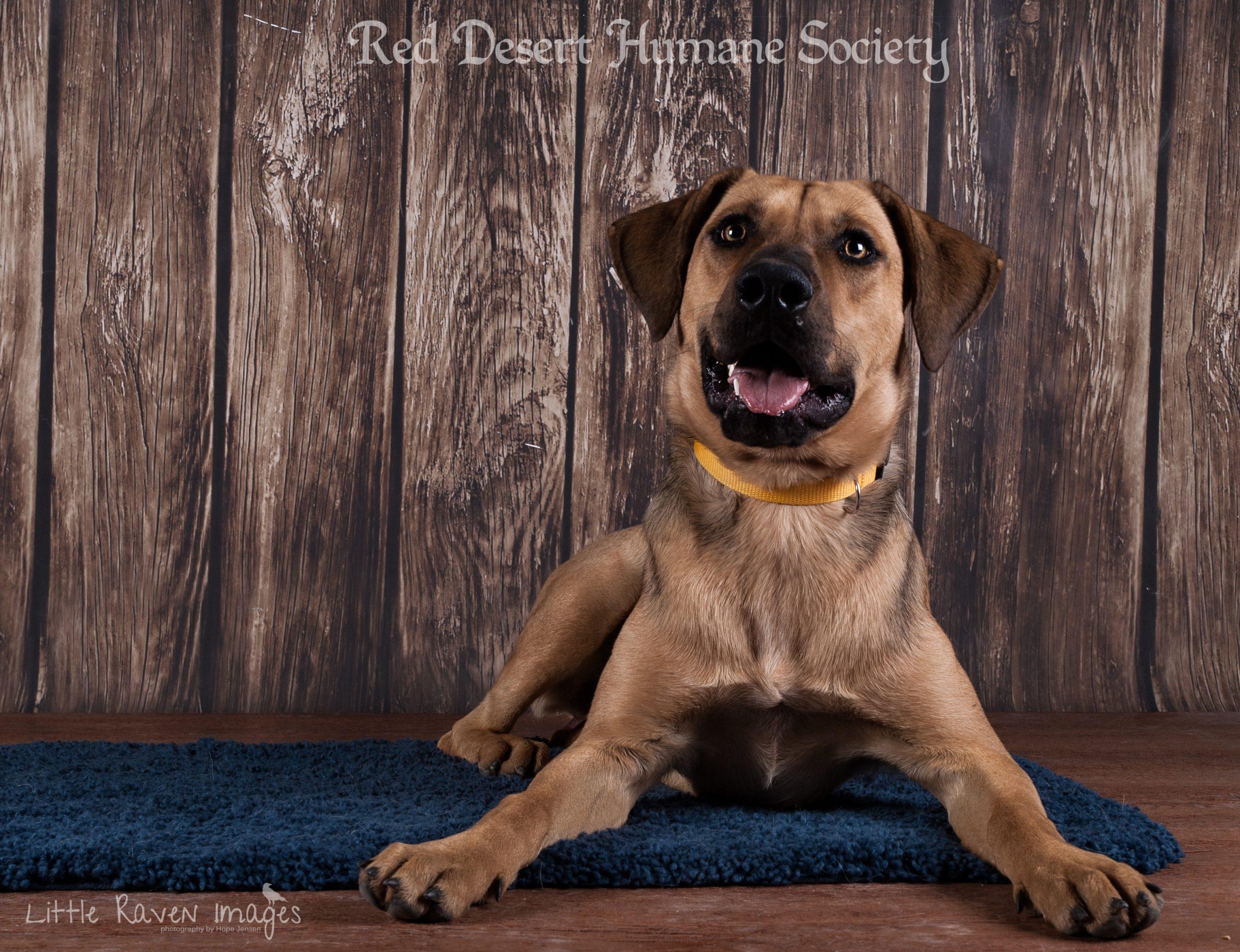 Rome, Smith and Wesson: Pet adoption spotlight