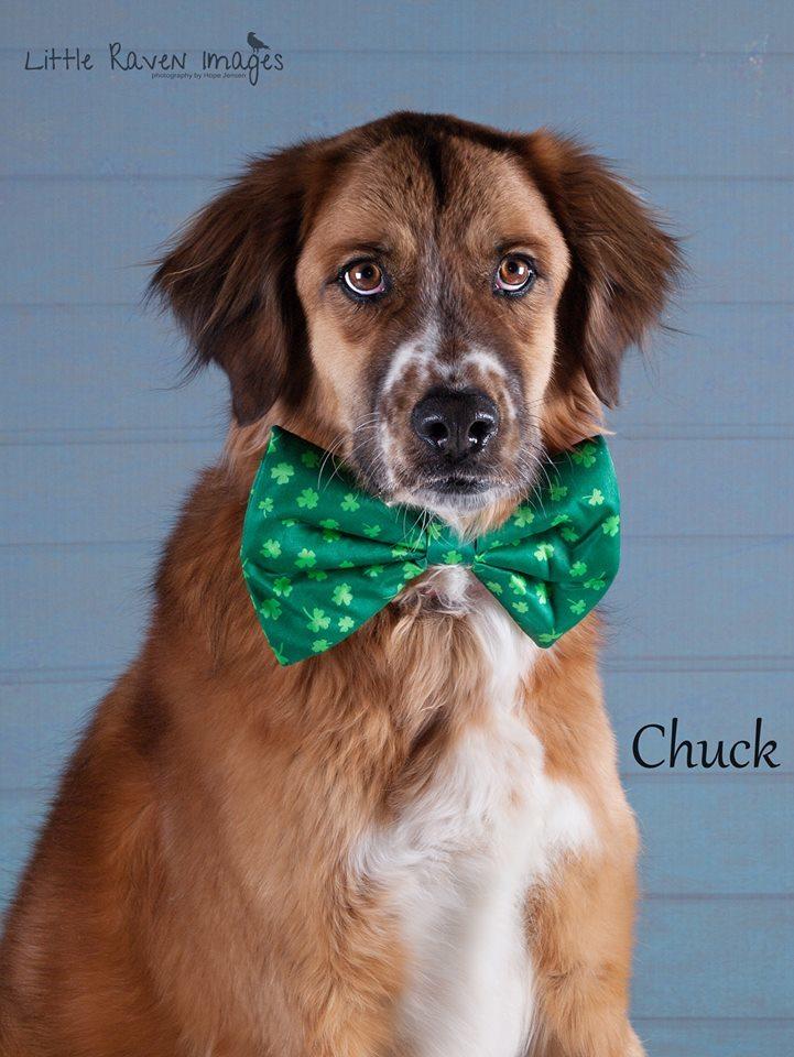 Pet Adoption Spotlight: Chuck
