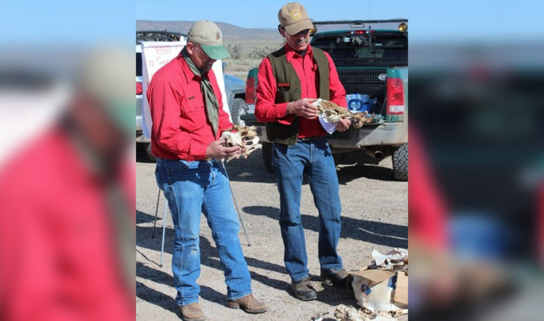 Game and Fish Deer Mortality Surveys Canceled This Year