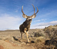 UW researchers to detail newly discovered deer migration April 22