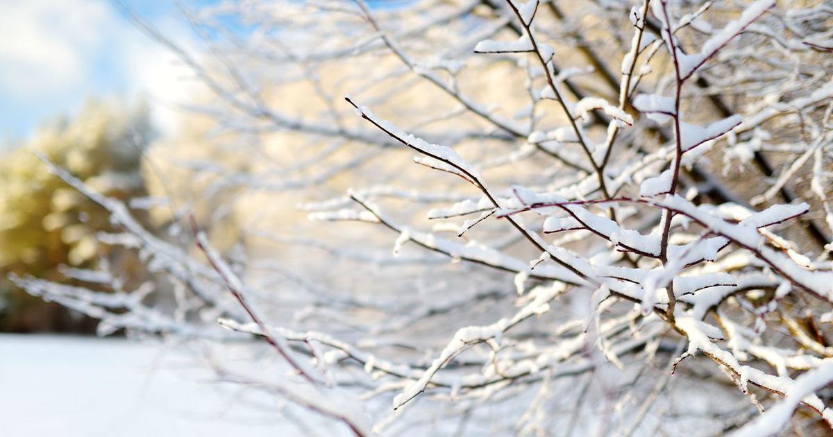 Snow Showers Anticipated to Return Wednesday