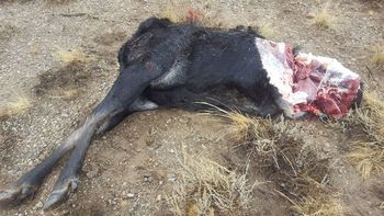 Moose Poached Near Pioneer Trails Picnic Grounds