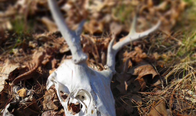 Former Cody Man Pleads Guilty to Poaching North Fork Deer